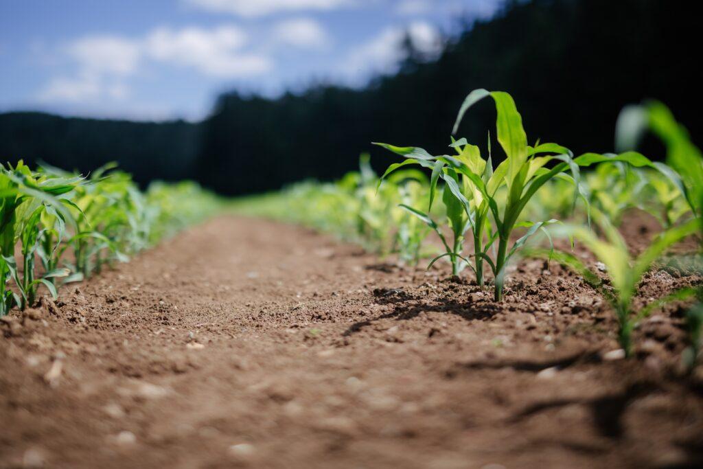 energia do biogas em solos de agricultura