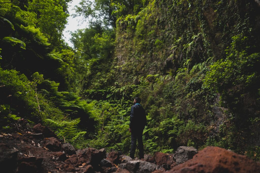homem olhando para a natureza